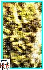carademontserrat_satelit